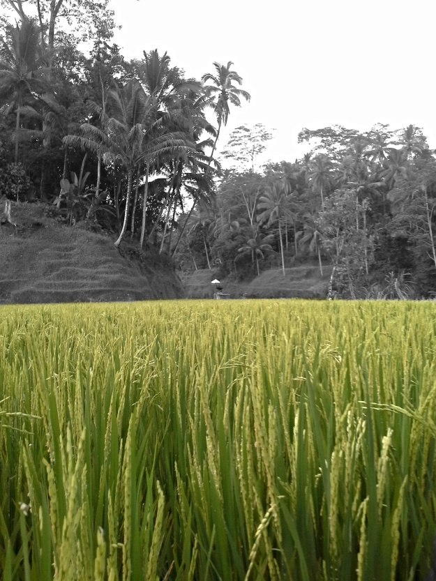 Bright rice