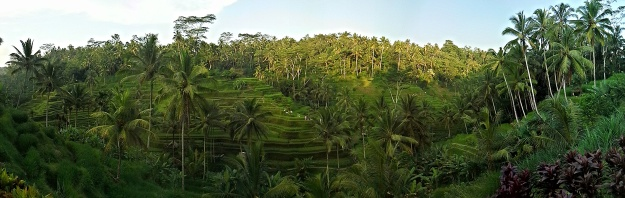 What a View! The Rice Terraces in Terisering, Ubud