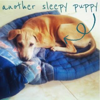 sleepy-anjing-kampung.jpg