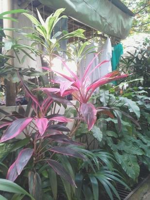 Warung-sopa-garden.jpg